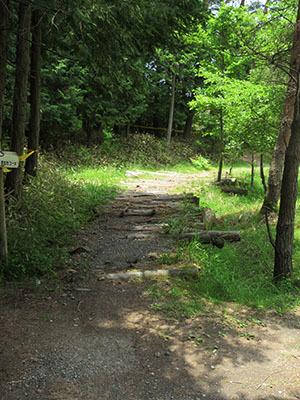 グリム冒険の森_MTB1500.jpg