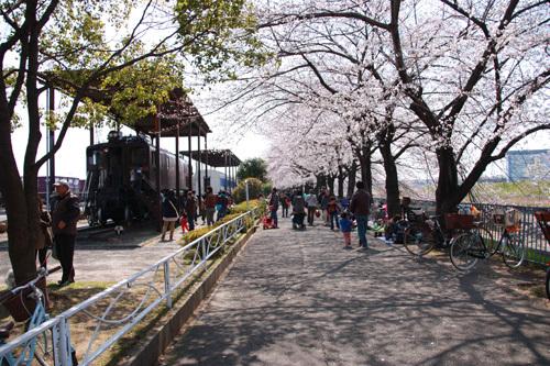新幹線公園過去花見2780.JPG