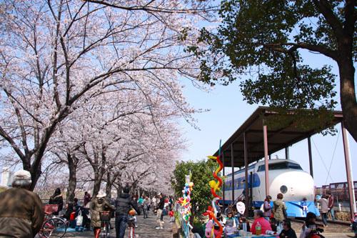 新幹線公園過去花見2781.JPG