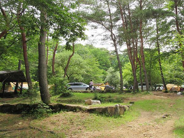 自然の森_メイン600_1806.JPG