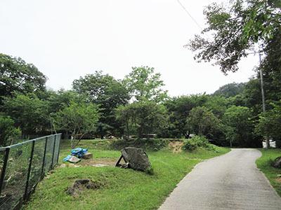 自然の森_坂道_1802.JPG