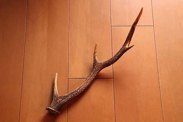 鹿のツノ_2078_600.jpg